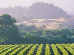 Sonoma-Spas-Wine-Country-SpaFinder