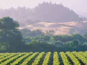 Sonoma-Spas-Wine-Country-SpaFinder