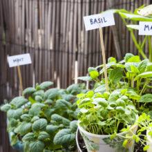 home-gardening